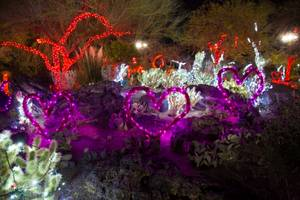 Lights of Love at the Ethel M Cactus Garden, Thursday Feb 8, 2018.