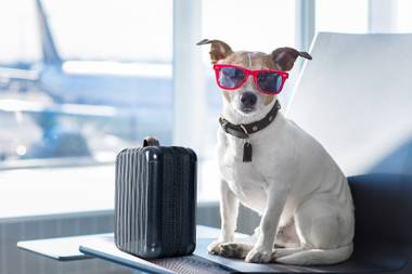 In addition to individual airline regulations, the USDA also monitors the transportation of certain pets, including dogs, cats, ferrets, rodents, hedgehogs, reptiles (turtles, frogs) and some birds, creating a layer of confusion.