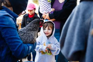 Blaise, 3, hesitates to pet a chicken at JR Pony Farms, Wednesday, Feb. 28, 2018.
