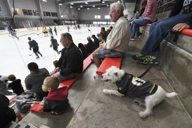 City National Arena is packed to capacity for a Golden Knights practice, all eyes on the ice, when a dog walks in wearing a Golden Knights jersey. Attention suddenly shifts.