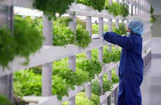 A worker looks over trays of microgreens and herbs in a grow room during the grand opening of Oasis Biotech, an indoor vertical farming facility, Wednesday, July 18, 2018.