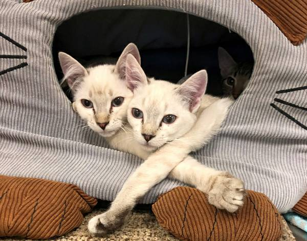 Rescue Groups Preparing Impounded Cats For Adoption